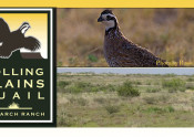 Rolling Plains Quail Research Ranch