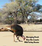 Managing Brush Near Rio Grande Wild Turkey Roosts
